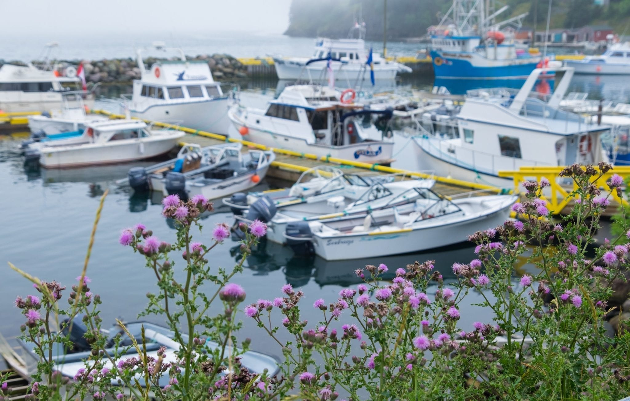 In he foreground, purple flowers on green stems; in the background fishing boats on a gray foggy harbor.
