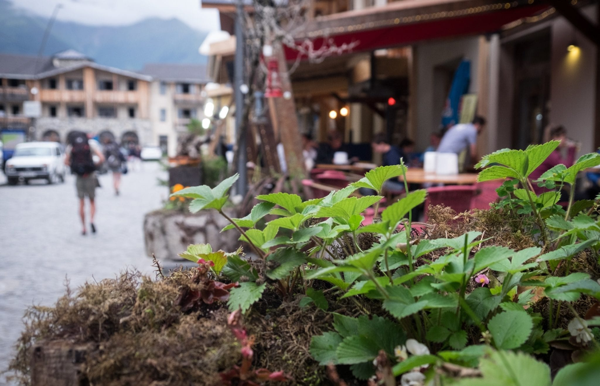 A close up on green plants in a pot; in the background is a cafe and a blurry man with a backpack walking down the street.