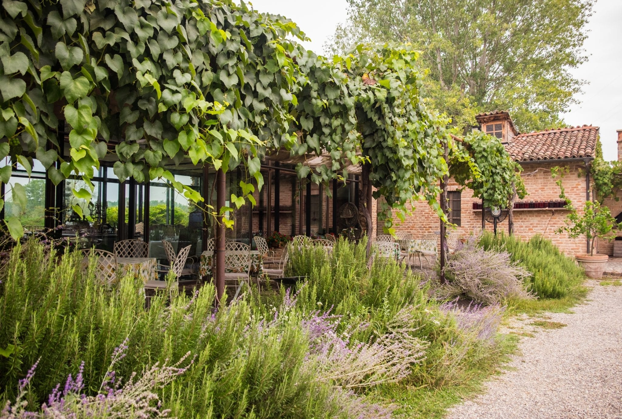 The outdoor dining area -- chairs underneath an ivy-covered trellis, surrounded by lavender bushes, red brick buildings in the background.