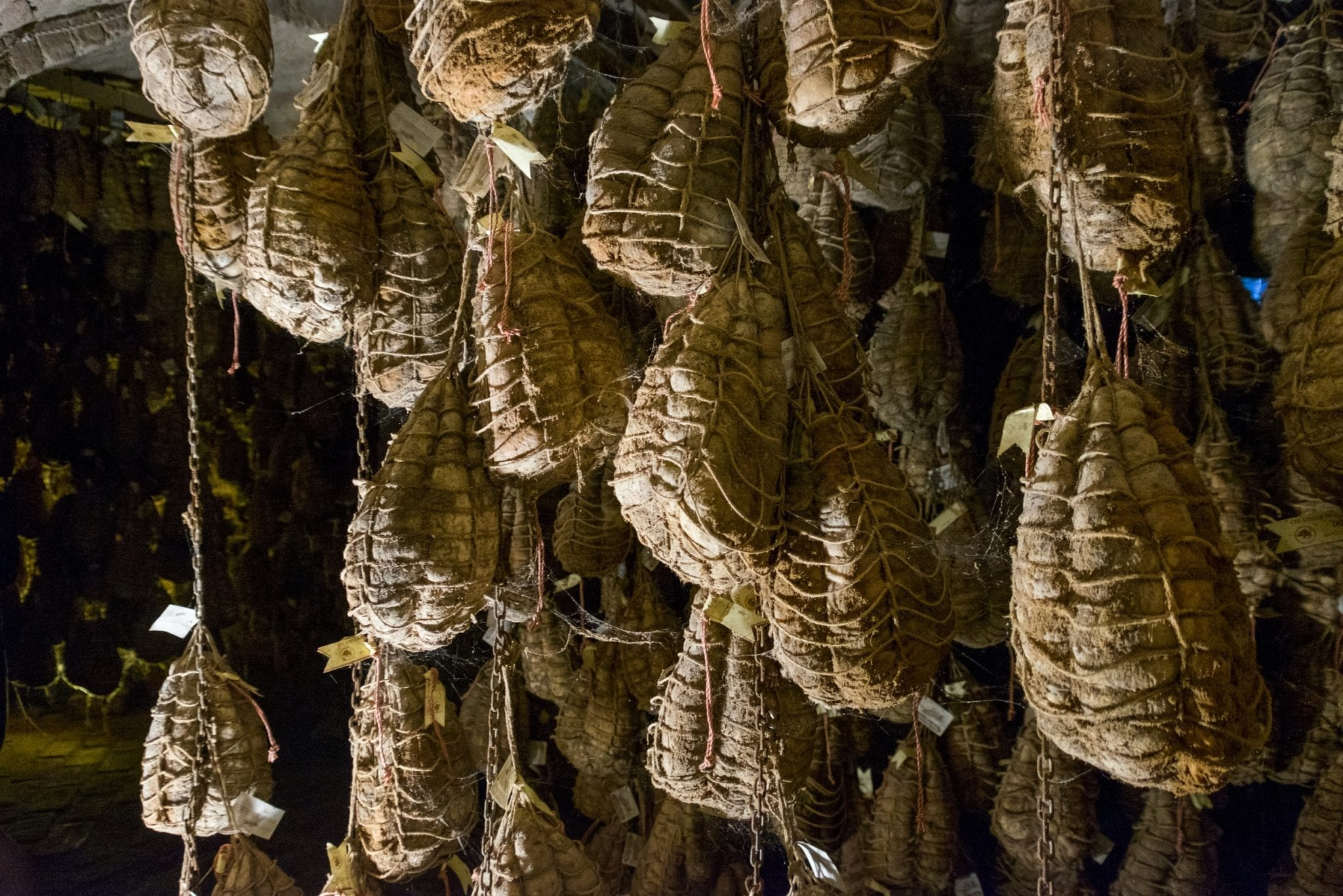 Culatello hams in a cellar, hanging from chains and connected with cobwebs.