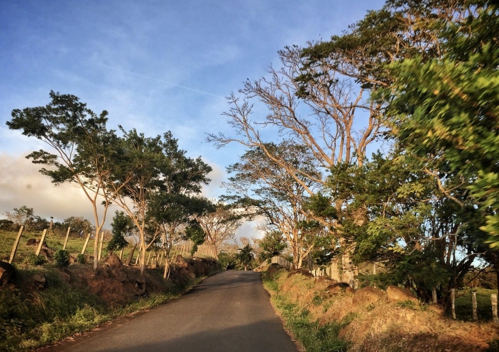 A road in Costa Rica edged with trees, bathed in golden light underneath a blue sky.