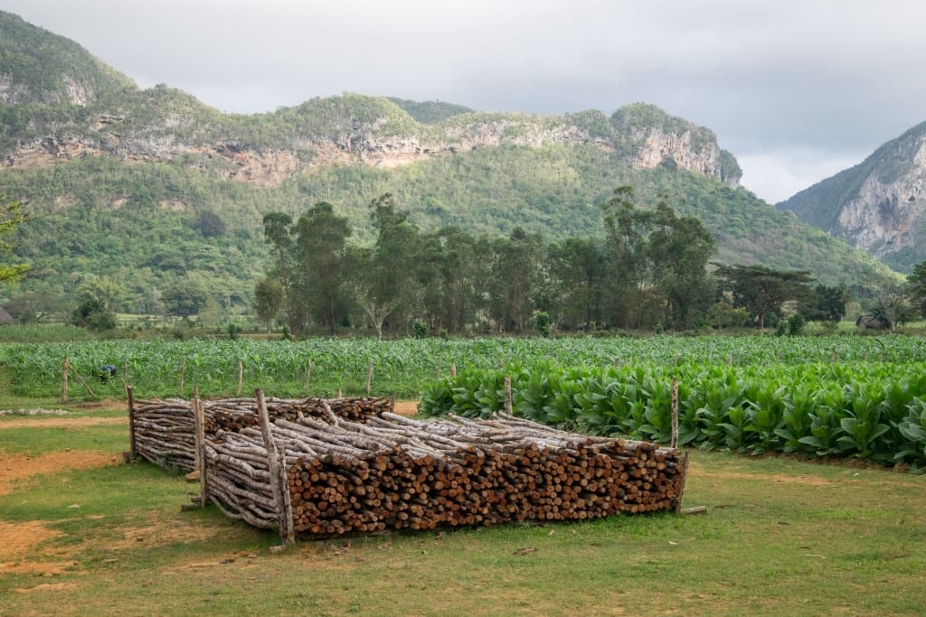 Rows of stacked wood in front of the mountains of Vinales and tobacco fields.