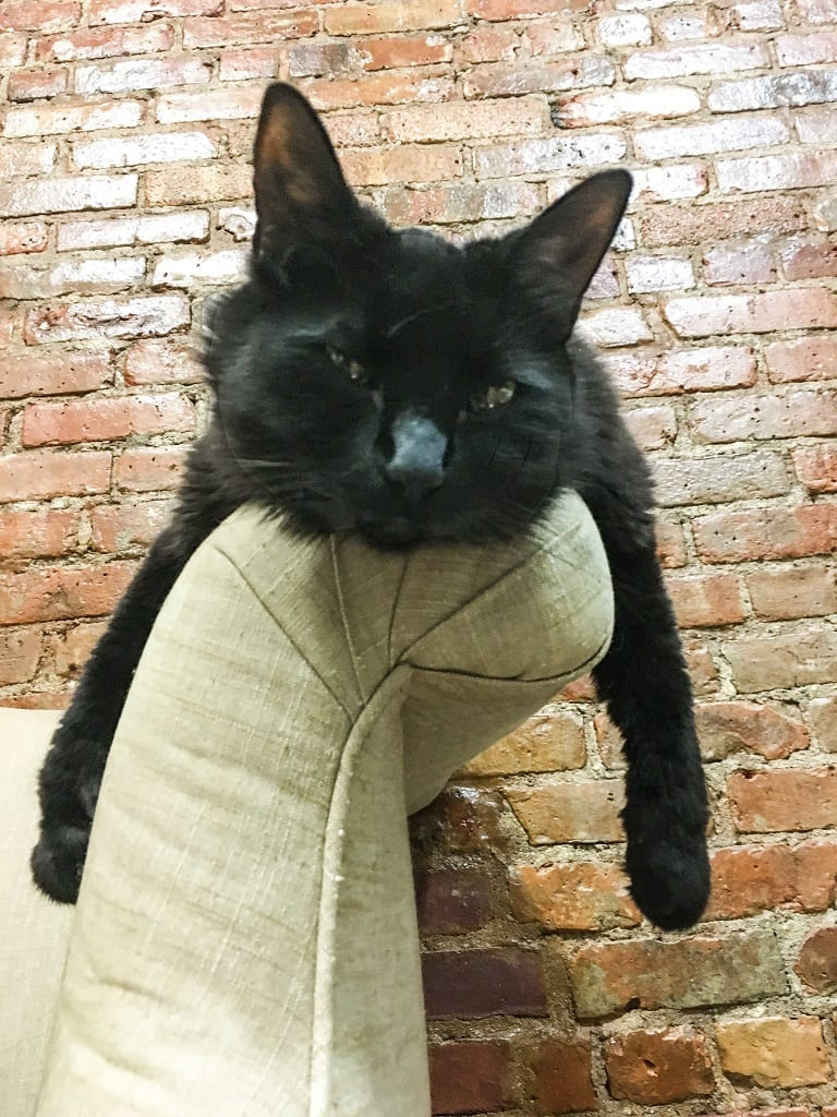 A black cat sitting on the arm of a couch, his arms on each side.