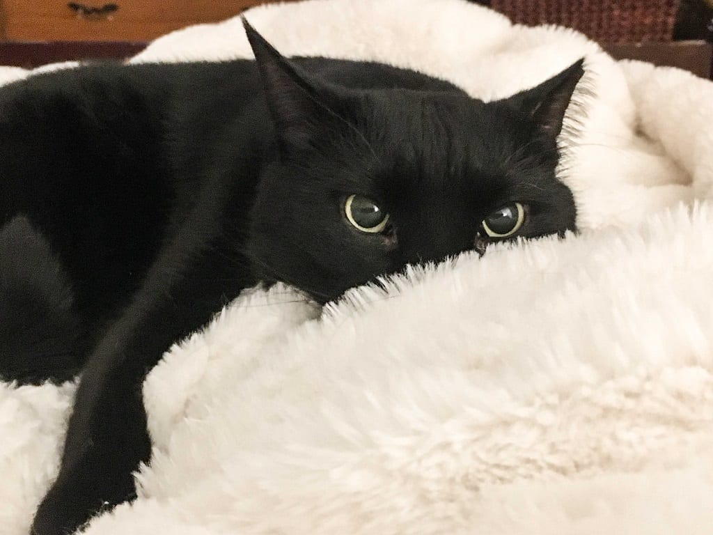 A black cat lying on a white blanket, a bit of mischief in his eyes.