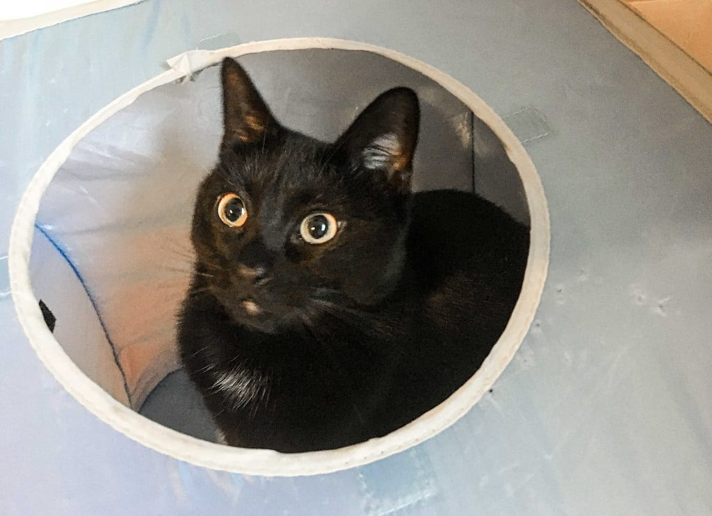 A black cat peeking out of the hole of a blue play cube.