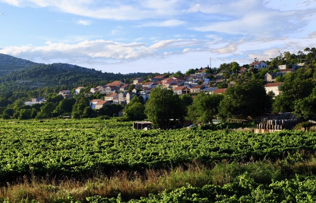Rows of vineyards and a small town with orange roofs in the background in Pelješac.