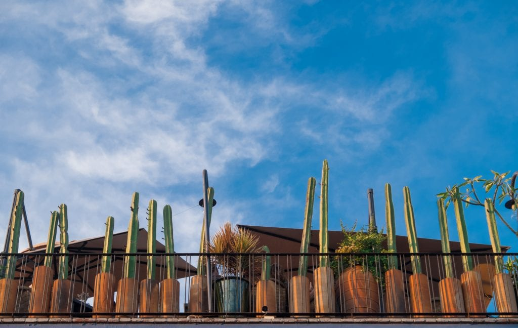 The balcony at a bar, edged with tall skinny green cacti in terra cotta pots, underneath a bright blue sky.