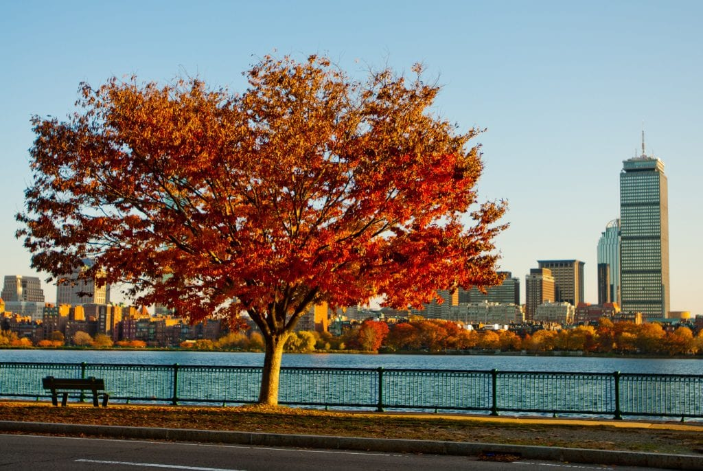 A bright red Japanese maple tree blooming next to a bench in front of the Charles River and the Boston skyline.