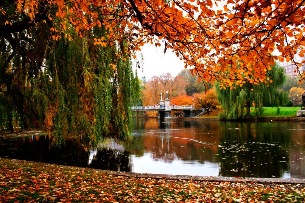 Boston's public garden on a gray fall day, some trees with bright orange leave, lots of leaves on the ground. You see the pond with the small suspension bridge in the background.