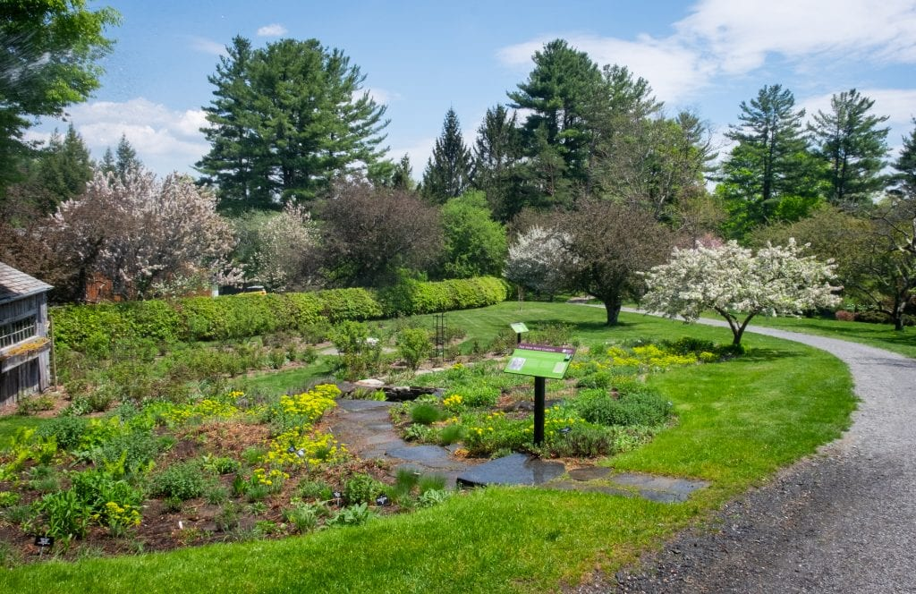 The well-manicured grounds of the Berkshire Botanical Garden, including rocky pathways through gardens of short flowers, and several trees blooming with white flowers.