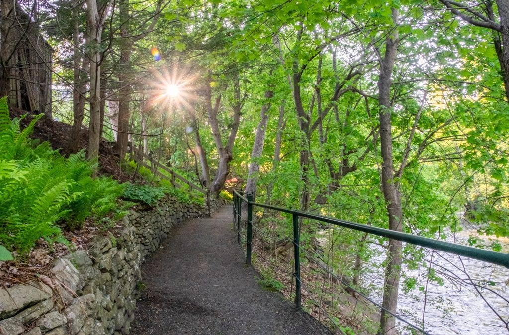 A gravel path along the river and through the woods in Great Barrington. The sun pokes through the trees like a sunburst.