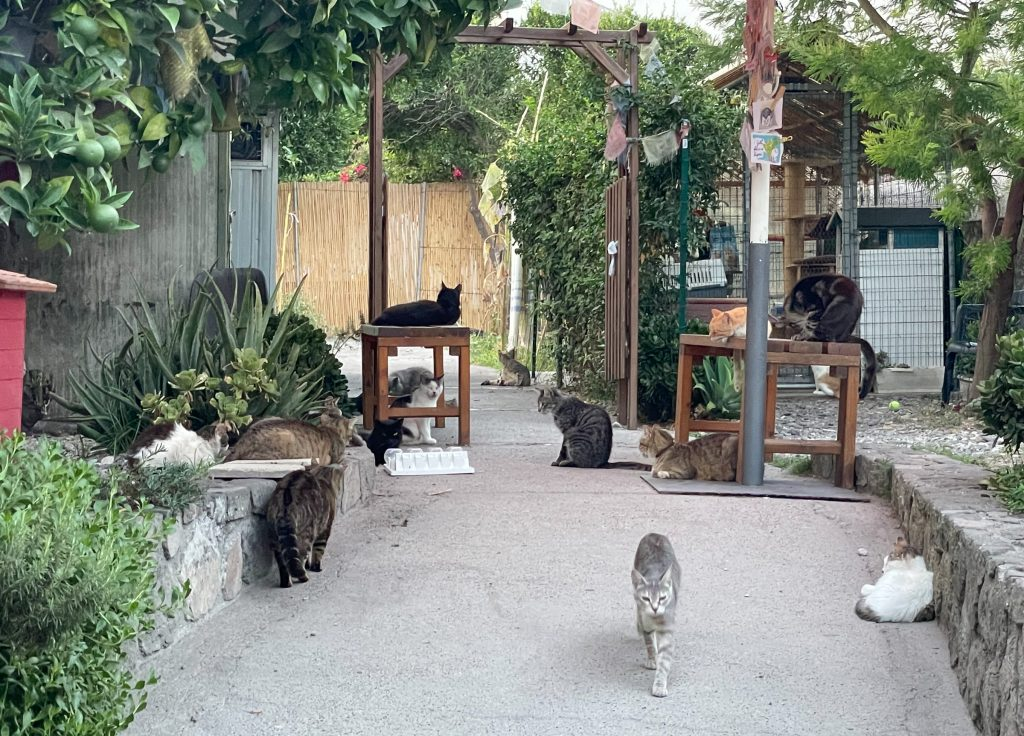 The inside of a cat sanctuary! A cement path with two short walls on each side, and about a dozen gray, brown, and orange cats, all looking well fed and chunky, lounging around.