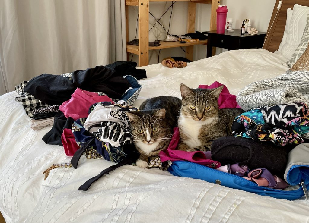 Lewis and Murray, the two gray tabby cats with white bellies and white paws, sitting on a big pile of Kate's clothes as she packs them for a trip.
